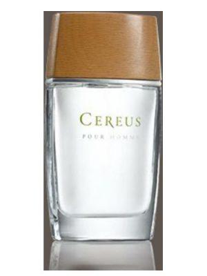 Cereus No.4 Cereus мужские